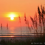 Sea-Oats-at-Sunrise-St-Augustine-Beach-2